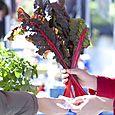 DAG HAP: Groen-ruilmarkt op zaterdag 15 oktober