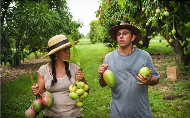 Fruit-hunters